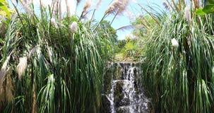 在热带植被中的瀑布 股票录像