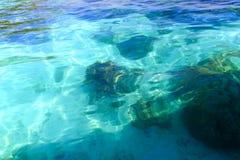在热带气候的浅水区珊瑚 库存照片