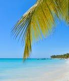 在热带海岛上的棕榈叶 免版税库存照片