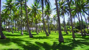 在热带海岛上的棕榈树在法属波利尼西亚 股票录像