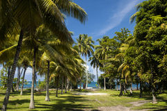 在热带海岛上的海滩 清楚的大海、沙子和棕榈树在塔希提岛 图库摄影