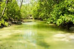 在热带海岛上的美洲红树森林 免版税图库摄影