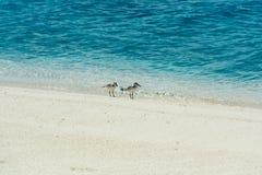 在热带海岛上的迁徙鸟 免版税库存照片