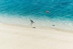 在热带海岛上的迁徙鸟 库存照片