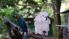 在热带海岛上的晴朗的夏日 异乎寻常的鸟 股票视频
