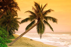 在热带海岛的掌上型计算机 免版税库存图片