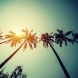 在热带海岸的可可椰子树与葡萄酒被定调子的和影片 免版税库存照片