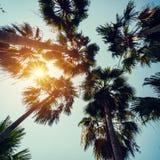 在热带海岸的可可椰子树与葡萄酒被定调子的和影片 免版税图库摄影