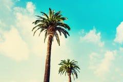 在热带海岸的棕榈树在葡萄酒样式和影片定了调子ag 库存照片