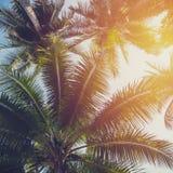 在热带海岸的椰子树与葡萄酒口气 免版税库存照片