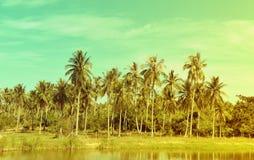 在热带海岸的椰子树, 免版税库存图片