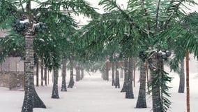 在热带海滩和下雪的棕榈树,寒假 影视素材