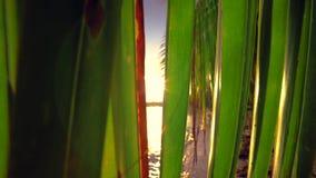 在热带海滩和棕榈树的日出 在热带叶子之间的阳光 股票录像