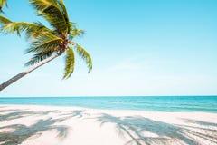 在热带海滩的可可椰子树美好的风景  免版税库存图片