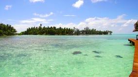在热带海滩的木码头在法属波利尼西亚 股票视频