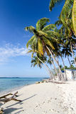 在热带海滩的棕榈树 免版税库存照片