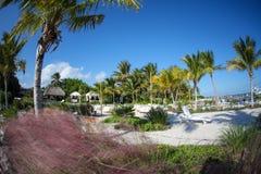 在热带海滩的棕榈树 免版税库存图片