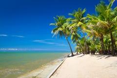 在热带海滩的棕榈树 库存照片
