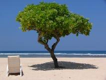 在热带海滩的结构树 库存图片