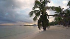 在热带海滩的美好的日出与可可椰子树 蓬塔卡纳手段,多米尼加共和国 股票录像