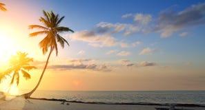 在热带海滩的艺术美好的日落 免版税图库摄影