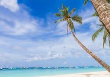 在热带海滩和海背景的棕榈树 免版税库存图片