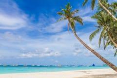 在热带海滩和海背景的棕榈树 免版税库存照片