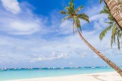 在热带海滩和海背景,暑假的棕榈树 免版税库存图片