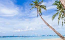 在热带海滩和海背景,暑假的棕榈树 库存图片