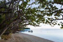 在热带海洋海岛上的早晨 斐济 免版税库存照片