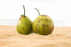 在热带海滩的两个新鲜的椰树饮用的椰子 免版税库存照片