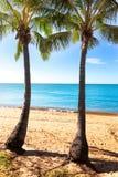 在热带海滩的两棵棕榈树 库存照片