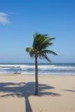 在热带海滩的唯一棕榈树 库存照片