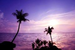 在热带海滩的日落和微明时间与棕榈树在夏天 库存图片