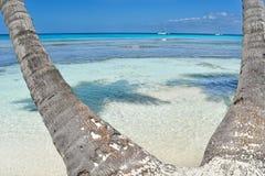 在热带海滩的棕榈树与水晶水和白色沙子 图库摄影