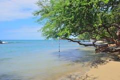 在热带海滩的橡皮筋跃迁夏威夷大岛 免版税库存照片