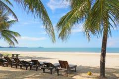 在热带海滩的海滩睡椅和可可椰子树 库存照片