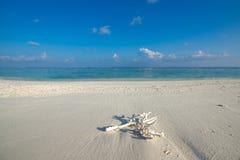 在热带海滩的珊瑚 免版税库存照片