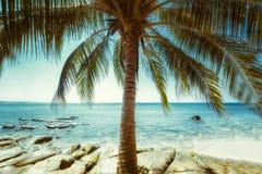 在热带海滩的美好的晴天与棕榈树 海洋土地 图库摄影