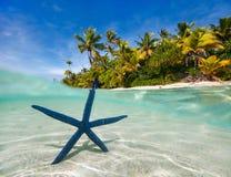 在热带海滩的蓝色海星 库存照片