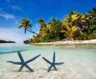 在热带海滩的Twi蓝色海星 图库摄影