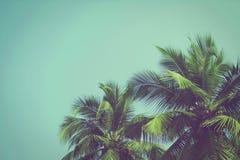 在热带海滩葡萄酒的可可椰子树过滤 免版税库存图片