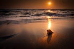 在热带海滩风景的日落。 在海洋海岸的海壳 库存图片