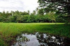 在热带湖的百合夏威夷的大岛 免版税库存图片
