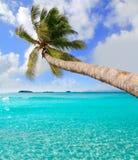 在热带理想的海滩的棕榈树在Ibiza 库存照片