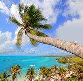 在热带理想的海滩的棕榈树 免版税库存照片