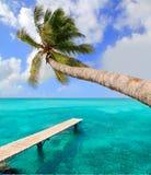 在热带理想的海滩的棕榈树 免版税库存图片