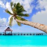 在热带理想的海滩的棕榈树 图库摄影
