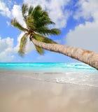在热带理想的海滩的棕榈树 库存照片