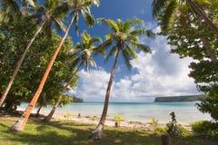 在热带白色沙子海滩的可可椰子树 库存照片